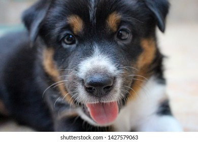 smily face of black, white and brown puppy/dog/animal with tounge out