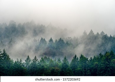 A smoke coming out of a forest full of different kinds of green plants in Canada