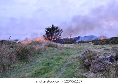 Smoke and fire from the controlled burning of gorse on the hillside in Wales UK