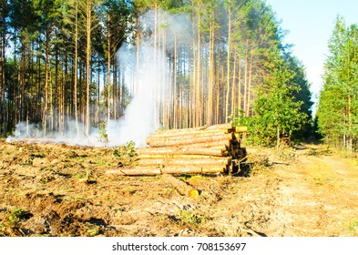 smoke in a pine forest in logging