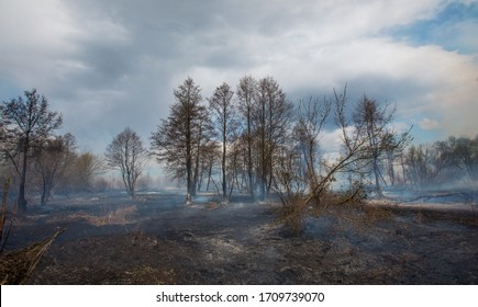 Smoke rising from a burned forest. Forest Fire. Development of forest fire. Flame is starting damage of trunk. Severe burn Fire destroyed everything Left only scorched trees and ashes.  Chernobyl.