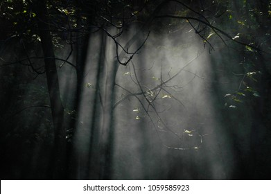 Smoke in the woods between the plants, forest with smoke,