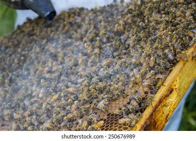 Beekeeping Queen Box Images, Stock Photos & Vectors