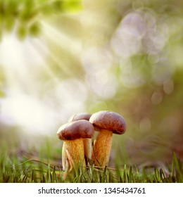 Smokey forest. Beautiful natural backgrounds with mushrooms and grass
