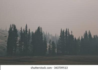 Smokey Tree Line