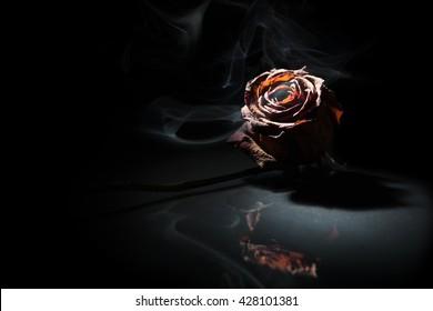 smoking dry rose on black background