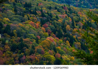 Smoky Mountain Fall Color Change Tree Foliage Background Nature