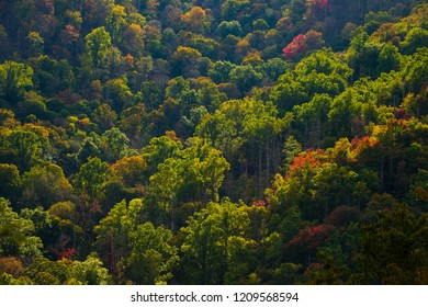 Smoky Mountain Fall Tree Color Change Foliage background texture pattern