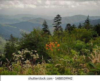 Smoky Mountains Clingmans Dome WildFlowers