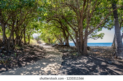 A smooth path arches to the left with trees casting dappled shadows on the ground near Pu'ukohola Heiau National Historic Site on the big island of Hawaii