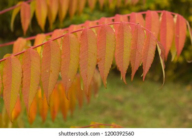 smooth red leaves, nature perfectionism
