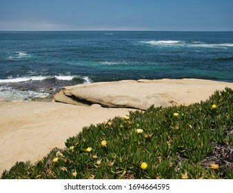 Smooth rocks and yellow flowers at the coast in California