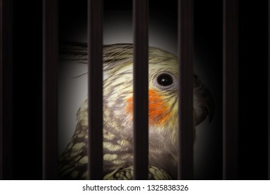smuggling of animals. Photomontage of bird inside a wooden cage, mistreatment of exotic birds.