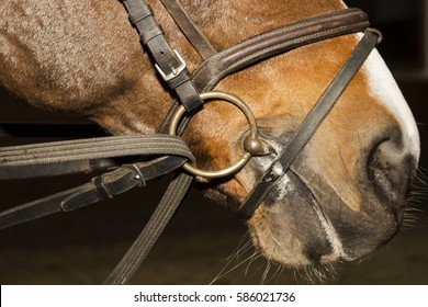 Snaffle bridle rein on the horse's head