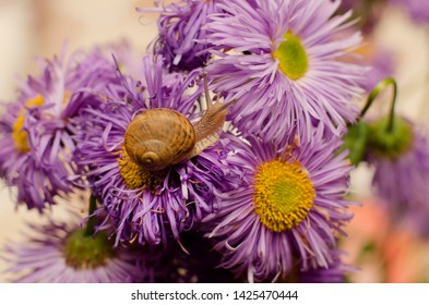 snail in action on beautiful flowers (Selective focus and smail depth of field)