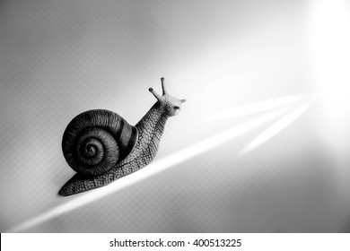 Snail with arrow,Business growth concept