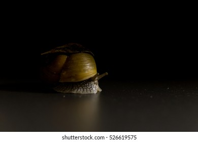 Snail - Art of Nature