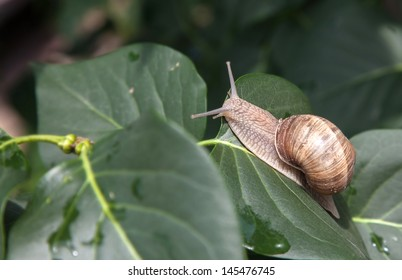 snail basks on a branch close up in nature