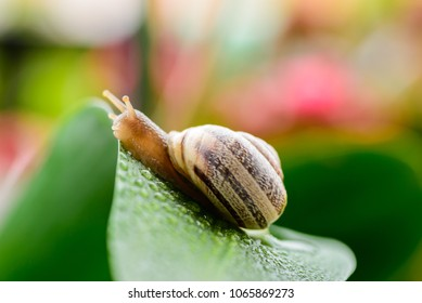 A snail browsing through the leaves