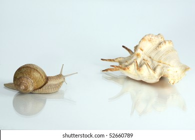 Snail by the horn of the big brother