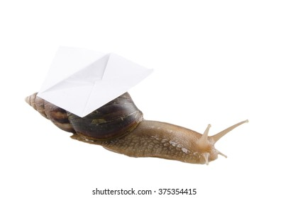 Snail carrying an envelope isolated on white (snail mail concept)