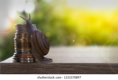 snail climbing and coins with natural blurred nature and lighting  background. Business and finance , Victory and success from patience , Slow economic growth