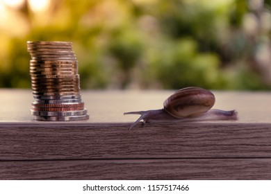 snail climbing go to coins with natural blurred nature and lighting  background. Business and finance , Victory and success from patience , Slow economic growth