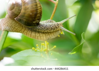 Snail close up/selective focus