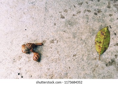 Snail is a common name loosely applied to shelled gastropods. The name is most often applied to land snails, terrestrial pulmonate gastropod molluscs