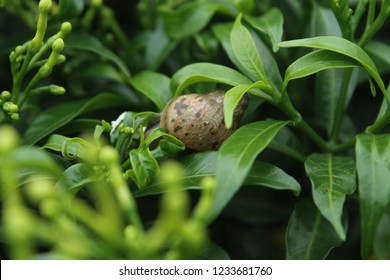 Snail is a common name loosely applied to shelled gastropods. The name is most often applied to land snails, terrestrial pulmonate gastropod molluscs.
