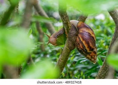 Snail is a common name that is applied most often to land snails, terrestrial pulmonate gastropod molluscs