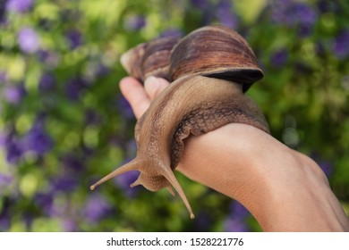 Snail cosmetics. Big african snail on woman's hand in the background of flowers.