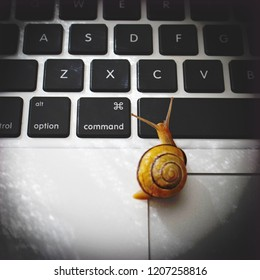 Snail crawling across laptop computer. Slow internet or connection speed. Snail mail concept. Computer needs upgrade to run faster and be more efficient. Increase your digital download speed.