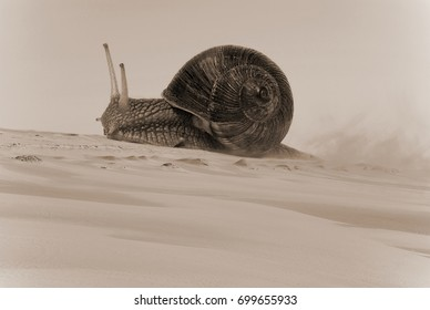 A snail crawling along the sand. Dune, desert, wind, trail. Procastination, laziness, sluggishness.