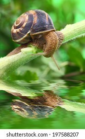 Snail crawling on plant with water and reflection