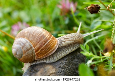 snail crawling on the stone