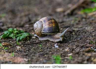 snail crawling over earthy path