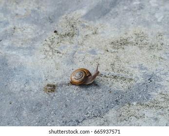 Snail crawling. Selective focus. Garden snail close up. Snail life.