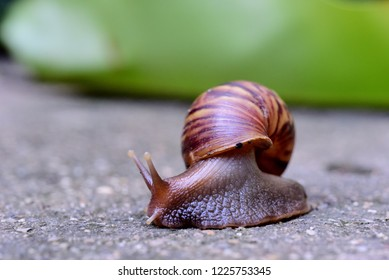 Snail is crawling slowly on the cement floor