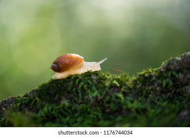 the snail crawls along a rock on which moss grows