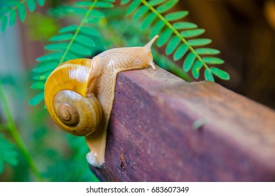 The snail crawls slowly on the log.