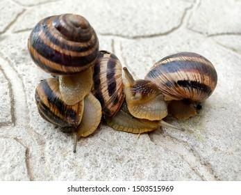A snail creeps on the ground.