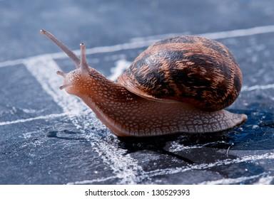 snail crosses the finish line alone as winner