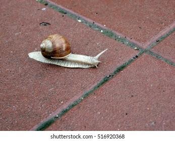 Snail crossing the border