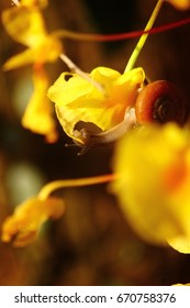 Snail eating orchid flower , cycle of nature