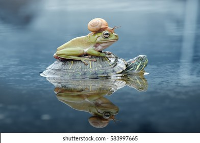 Улитка, лягушка, черепаха, тупая лягушка, дерево лягушка