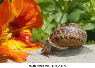 Schnecke im Garten, die Blumen isst