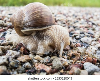 snail goes through the road, the shell on the back