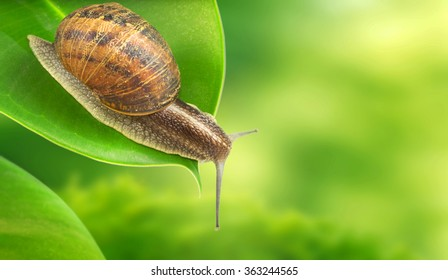 Snail green background