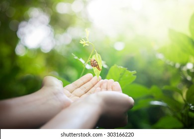 Snail in human hands on blurred abstract green forest, desert over colorful sunset background. Ecology concept. World Environment Day concept